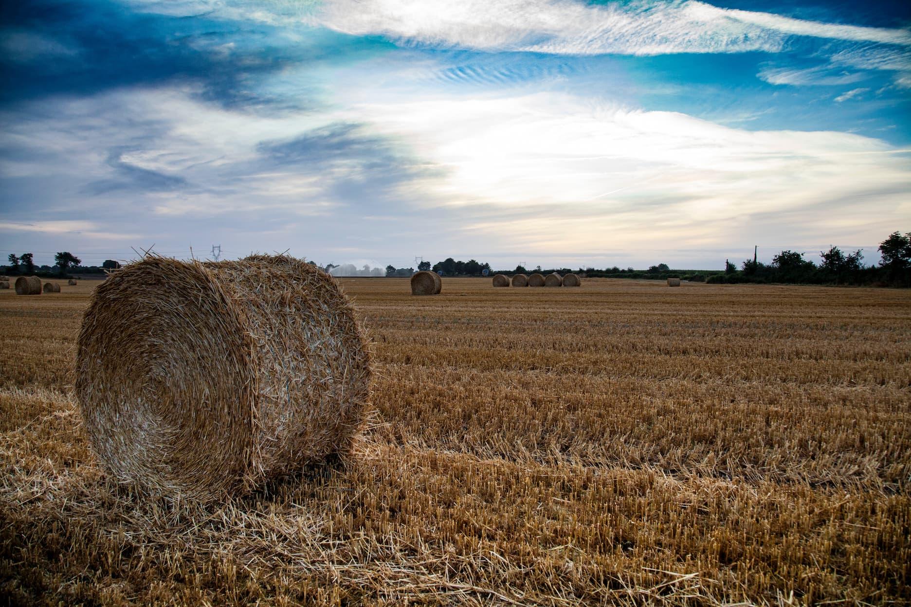 Culture agricole : définition